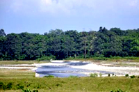 Neora River flowing beside Gorumara National Park